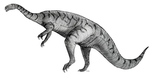 A sketch of a plateosaurus